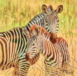 Crawshay's Zebra, South Luangwa by Tony Forrest -  sized 10x10 inches. Available from Whitewall Galleries